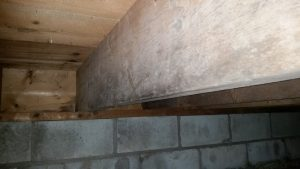 Basement in Virginia showing signs of mold.